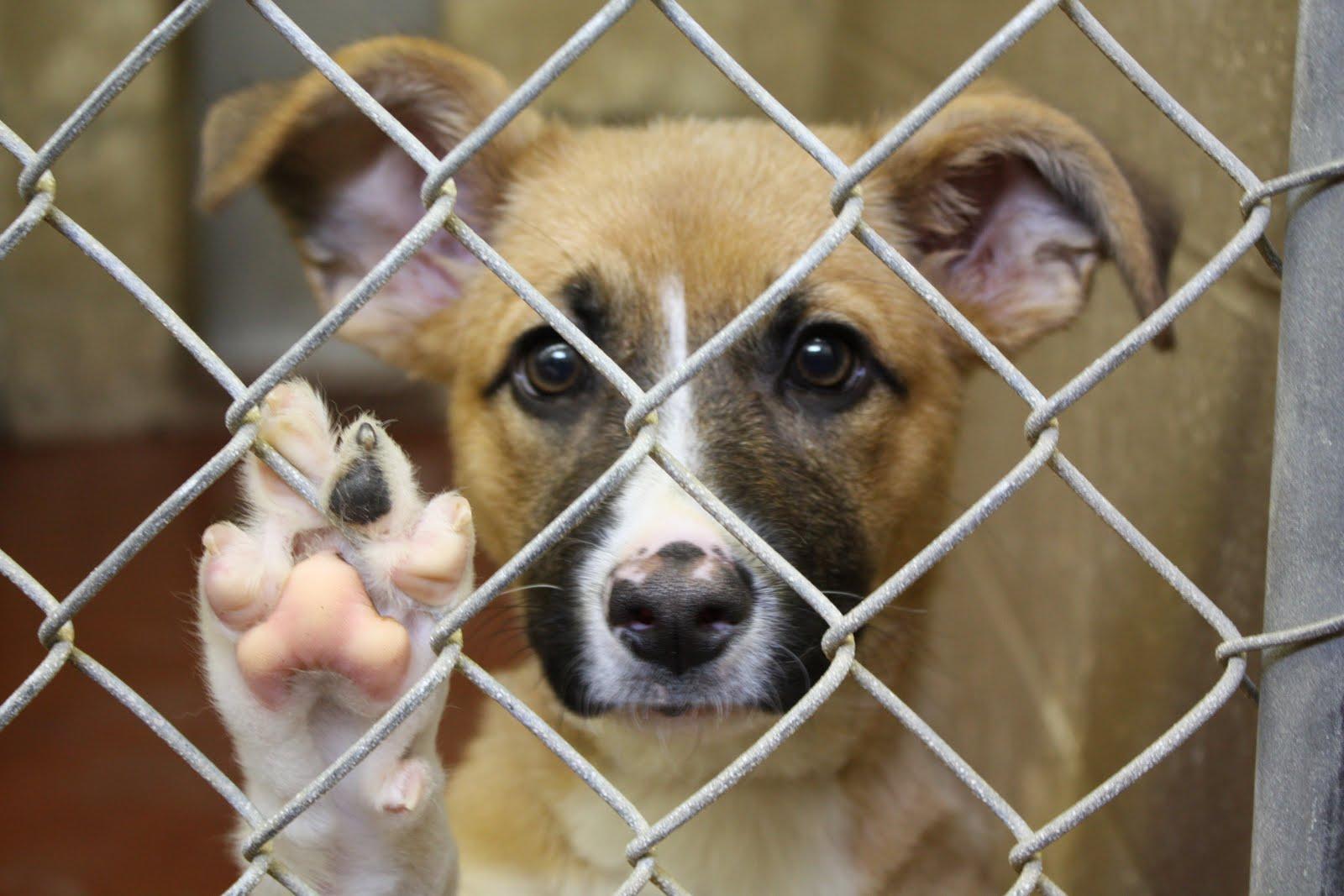 give me shelter capeway veterinary hospital blog capeway